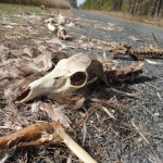 Skeleton Road near Blackwater National Wildlife Refuge