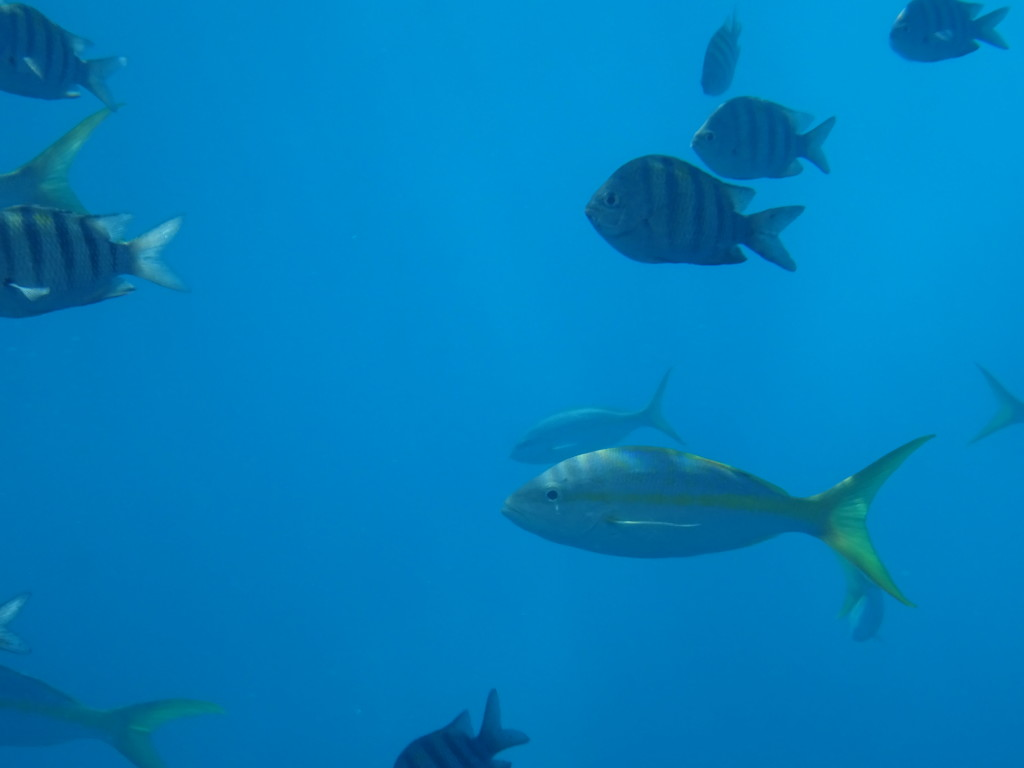 Being Inside the Fish Bowl of St. Barts (aka, We All Live ...
