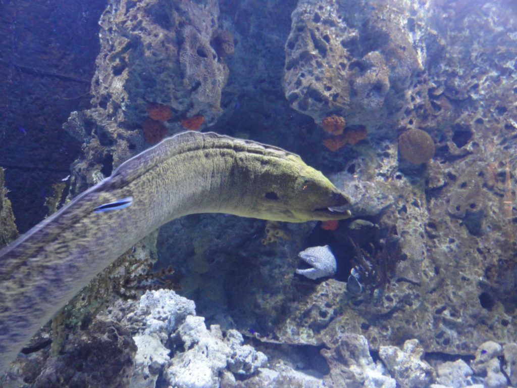 Beijing Aquarium moray eels