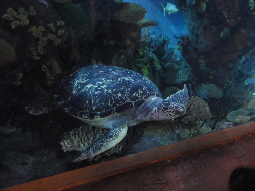Beijing Aquarium sea turtles