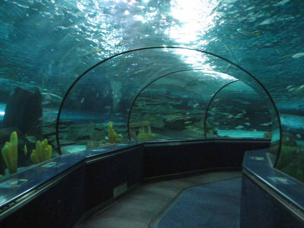 Ripley S Aquarium Of Myrtle Beach Science Traveler