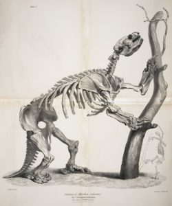 Darwin's giant ground sloth
